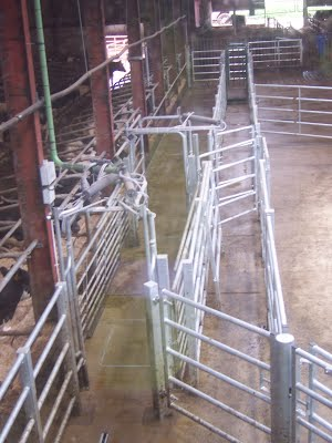 Parlour exit race and handling system